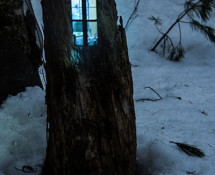 Daniel Barreto - Progetto Woodhouses