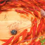 Riusuke Fukahori – Pesci nella resina