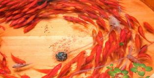 I pesci rossi 3D di Riusuke Fukahori