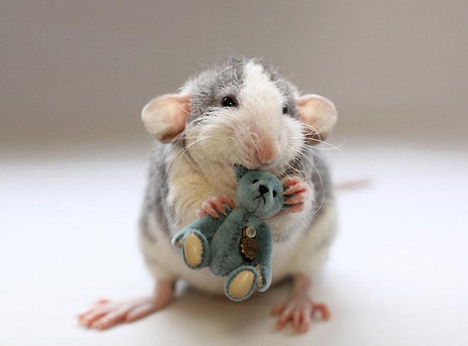 Rat with Teddy Bear