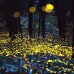 Hiramatsu Tsuneaki – Fireflies