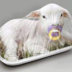 A Pasqua non mangiate agnelli e capretti