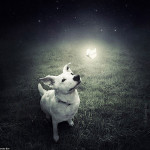 Sarolta Ban – Surreal Dogs photography