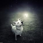 Sarolta Ban – Surreal Dogs photography