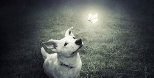Sarolta Ban - Surreal Dogs photography