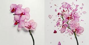 Jon Shireman - Broken flowers