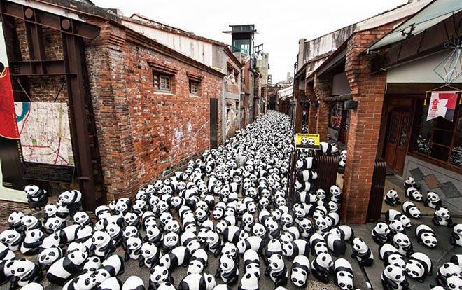 Pandas - Hong Kong