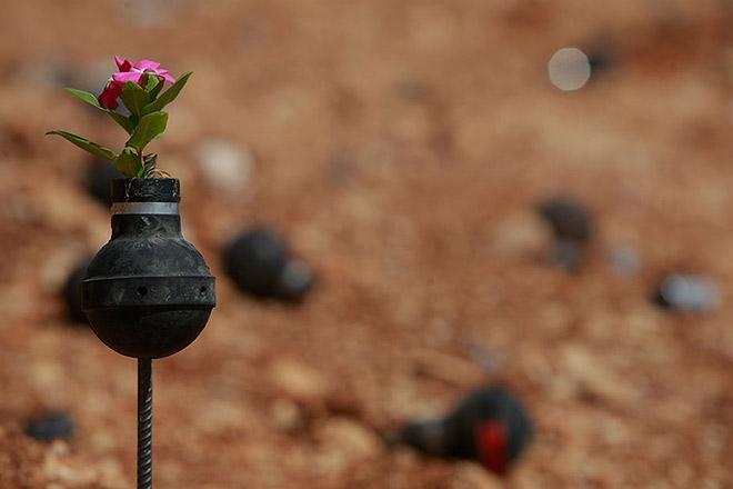 Dalle granate nascono i fiori