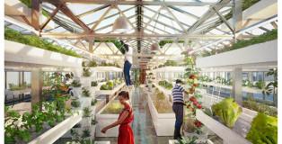 Urban farmers rooftop - Design strategico