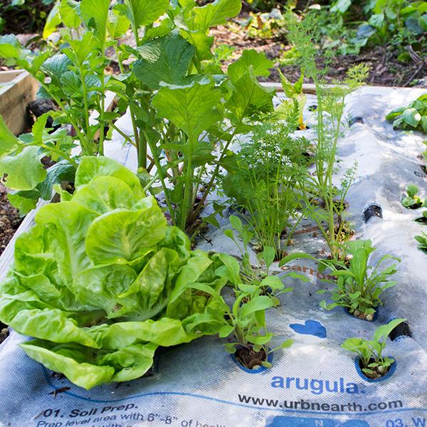 UrbnEearth - Urbmat, costruire un orto in uno spazio ristretto