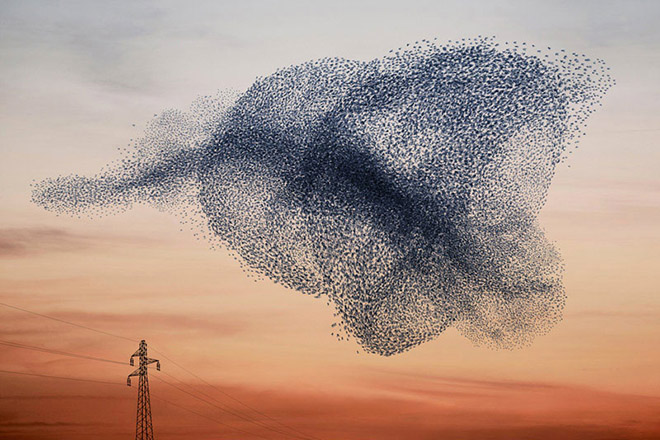 Murmurations -  Ephemeral plastic sculptures