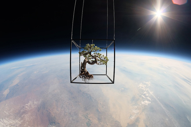 Azuma Makoto – Exobiotanica, Botanical space flight