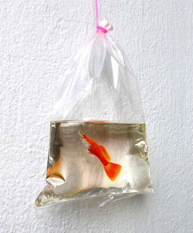 Pesci nella resina