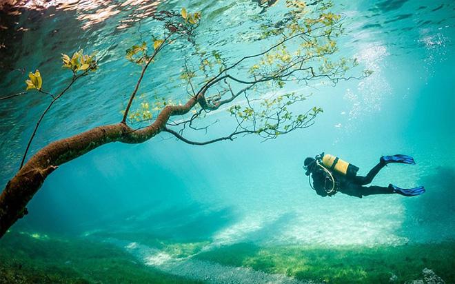"Third Place Winner: ""Diver in Magic Kingdom"" – Marc Henauer"