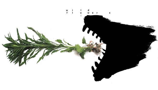 Wild Flowers – Saturare spontaneamente gli spazi