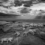 Winners Wildlife Photographer of the year 2014