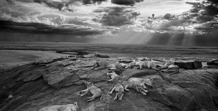 Michael 'Nick' Nichols - The last great picture, Wildlife Photographer of the year 2014. Winner natural design