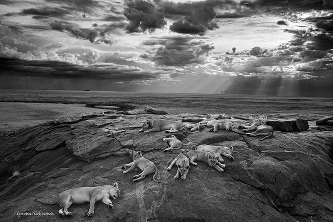 Winners Wildlife Photographer of the year 2014