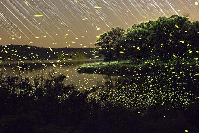 Vincent Brady – Fireflies