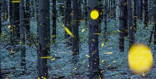 Vincent Brady - Fireflies