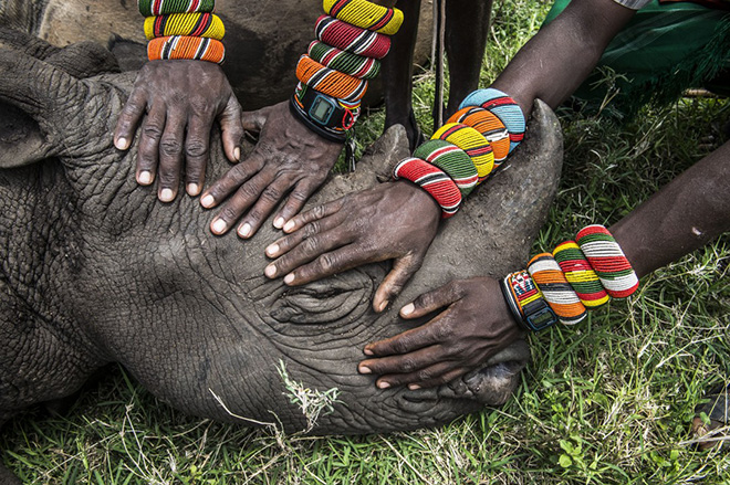 Amy Vitale - Orphaned Rhino - World Press Photo of the year 2014