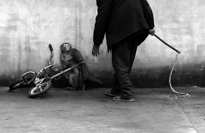 YONGZHI CHU - Monkey training for a circus - World Press Photo of the year 2014