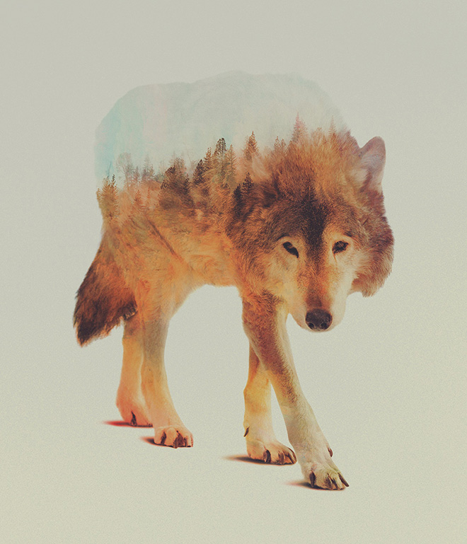 Andreas Lie – Animal Portraits