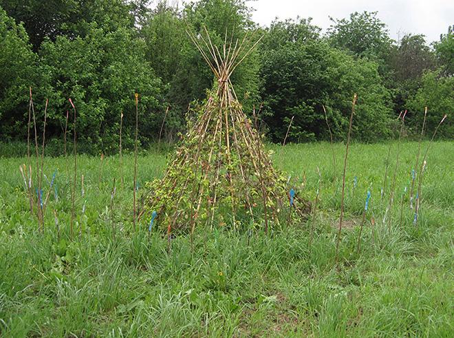 Monika Wolf - Teppee, le piante sacre degli Indiani d'America, 2014 - DepurArt Lab gallery