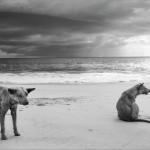 13° Trieste Photofestival – Mostra fotografica