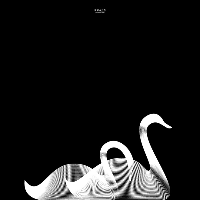 Andrea Minini - Swans, Animals in Moiré | 3rd series