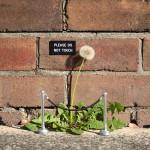 Michael Pederson – Public Projects