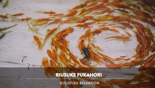Riusuke Fukahori - Goldfish Salvation