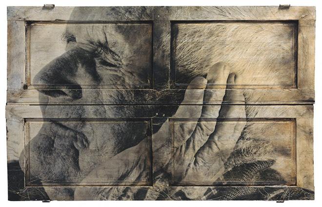 JR (FR) 2009, inchiostri su legno