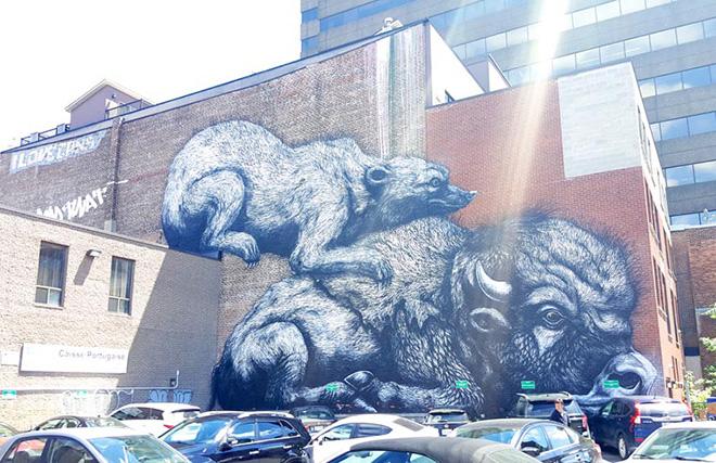 ROA - Mural Festival 2016, Montreal. photo credit:  Fabien Bouchard