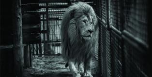 Jo-Anne Mc Arthur - Born Free Foundation. Aniamli negli zoo europei (Germania)