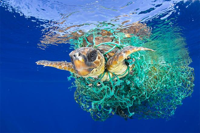 Francis Pérez - Caretta Caretta Trapped, Tenerife. Canary Islands, Spain, June 8, 2016, World Press Photo 2017, Nature, first prize singles.