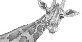 Arianna Fioratti Loreto - Giraffe, (2017) Pen and black ink on paper – 117 x 77 cm