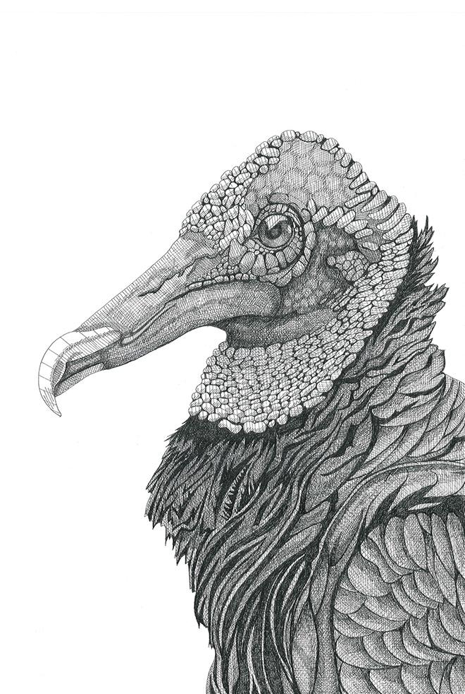 Arianna Fioratti Loreto - Turkey Volture, (2017) Pen and black ink on paper – 33 x 47,5 cm