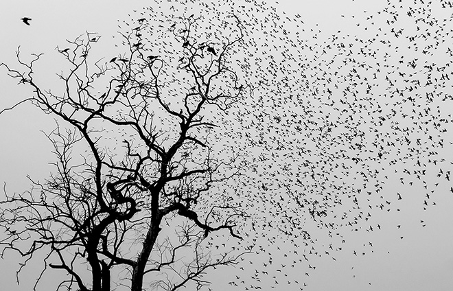 Robi Chakraborty - Birds, Honorable Mention, MonoVisions Photography Awards 2017