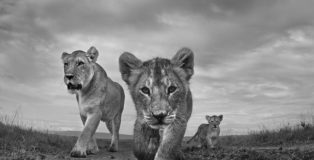 Anup Shah - The Mara, Black & White Series of the year 2017, MonoVisions Photography Awards