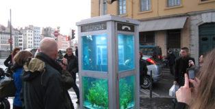 Benedetto Bufalino - Pesci al telefono