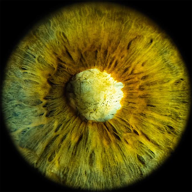 Annalaura di Luggo – Blind Vision