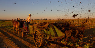 ©Peter Essick - Amish Farmer, Oxford, Pennsylvania. Amish farmer Levi Fisher, 19 and Ben Fisher, 15, spreading manure from his cows on a corn field that was recently harvested on his farm in Oxford, PA.