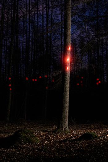 Pixi - Digital Organism. photo by Sander van der Bij
