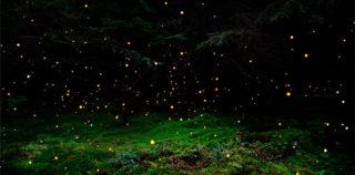 Ellie Davis – Nebulae