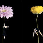 Erika Zolli – Aerial Flowers