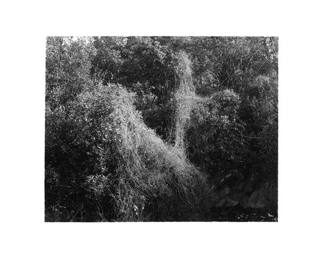 David Wilson - Shores / Plains / Mountains