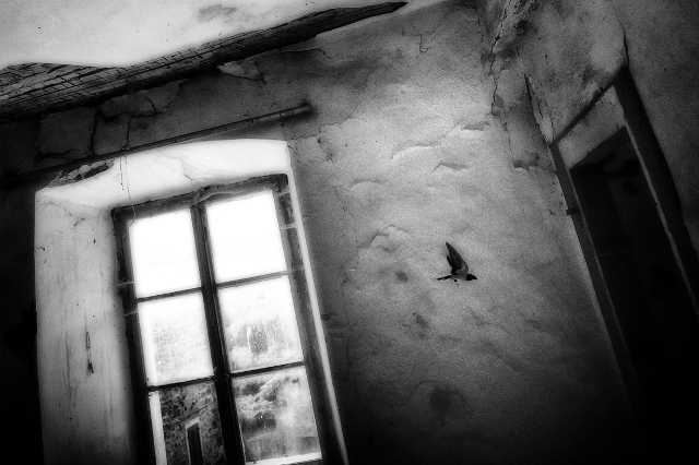 Giulio Bonivento - La vita sottile