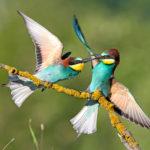 La FIAF al vertice della fotografia naturalistica mondiale