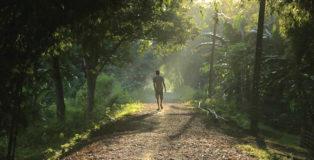 Forest Man - Un sogno green che non si ferma, il documentario su Jadav Molai Payeng